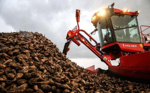 Горький конец сладкой Украины: «Незалежная» закрывает последние сахарные заводы
