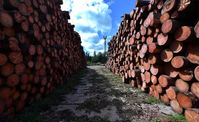 Картинки по запросу дрова в европу фото